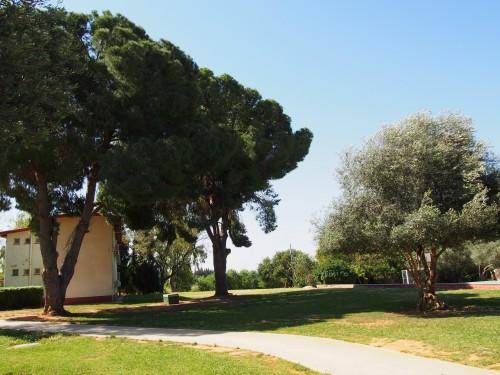 Toujours Givat Haviva. Un centre d'études sur la société israélienne conçu comme un kibboutz
